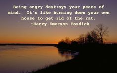Being Angry Destroys Your Peaces Of Mind Its Like Buring Down Your Own House To Get Rid Of The Rat