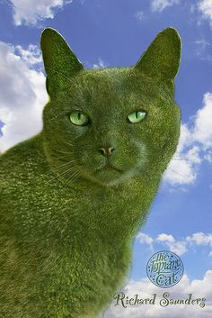 Portrait of The Topiary Cat, based on a photo of Tolly, his creator's cat, a Russian Blue.