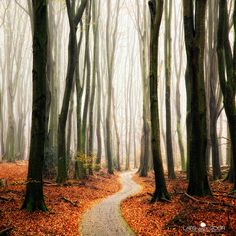 Winter Around the Corner by larsvandegoor.com, via Flickr