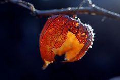 red lantern by *augenweide on deviantART