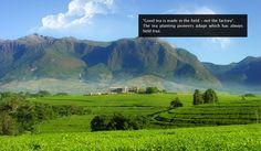 Tea'n'Teas - Tea Plantation