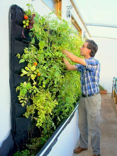 Plants On Walls Vertical Garden Systems http://www.plantsonwalls.com