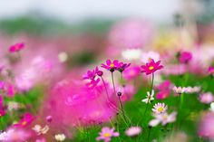 Beautiful Flowers, Nature, Plants, Photos, Naturaleza, Pictures, Plant, Nature Illustration, Off Grid