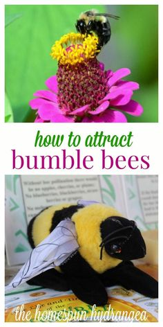Bees are vital to our planet and environment, so take a look at these 12 ways to attract bumble bees to your yard and garden!