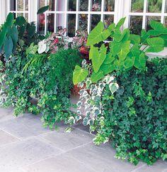 foliage love