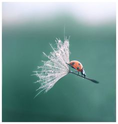 Impossible is nothing. by ~Lentilcia on deviantART