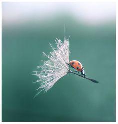 hoe een lieveheersbeestje leert vliegen als een heks!