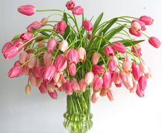 runs contrary to what most people might think flowers should do and how they should behave. but THIS IS MAGNIFICENT! tulips deserve their own board from me.