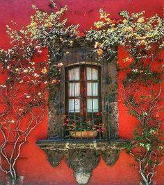 44 Beautiful Flower Door for You Floral Lovers - TopDesignIdeas Old Windows, Windows And Doors, Window View, Window Wall, Through The Window, Old Doors, Window Boxes, Doorway, Architecture Details