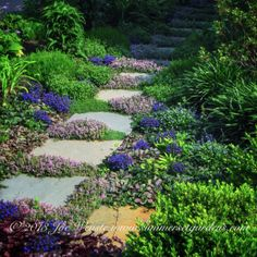A garden path planted with a variety of low growing perenials.   Landscape design and Construction Services in the NY and NJ areas.  Summerset Gardens Elegant Landscape Design, Fine Workmanship   845-590-7306  http://www.summersetgardens.com