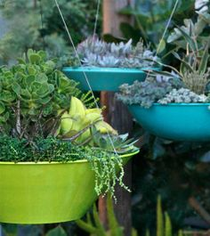 Vancouver's Custom Modern Hanging Baskets and Planters