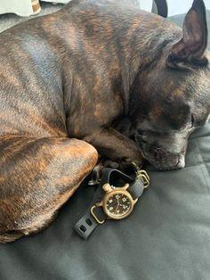 Man Watches, Boston Terrier, Bronze, Dogs, Animals, Boston Terriers, Animales, Animaux, Pet Dogs