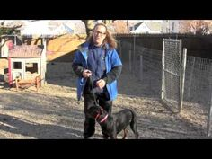Remote Collar recall 101-  Solid K9 Training  Another e-collar training video.