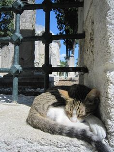 Cat at the foot of a mosque entrance in Istanbul, Turkey