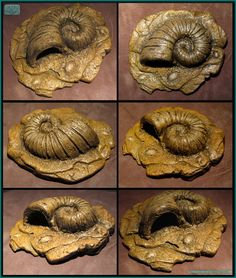 Lord Helix Fossil - Realistic Replica - Consult for Guidance - Twitch Plays Pokemon Prop - Made to Order - Realistic or Original Colors