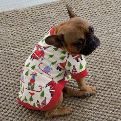 Santa's Coming Dogs' Sleepwear