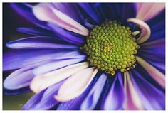 purple and green flower macro photograph by Monica Wilkinson