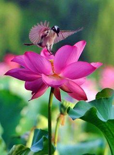 Fuchsia flower with birds Small Birds, Colorful Birds, Pet Birds, Flying Flowers, Wildlife Art, Bird Feathers, Flower Tattoos, Beautiful Birds, Pretty Flowers