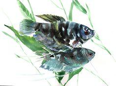 Gourami Fish, Original watercolor painting, 9 X 12 in, fish lover art, fish painting, black blue aquarium fish art