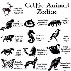 In-depth descriptions for all 13 CELTIC ZODIAC SIGNS. Learn all about your Celtic Animal Zodiac meanings, personality & traits. Celtic Astrology, too! Adder Snake, Celtic Animals, Book Of Shadows, Numerology, Magick, Wicca Witchcraft, Aquarius, Sagittarius, Pisces Horoscope