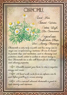 Printable Herbs Book of Shadows Pages Set 1 Herbs & Plants Correspondence Grimoire Pages Witchcraft Wicca Printable BOS Wicca Herbs, Witchcraft Herbs, Witchcraft Books, Green Witchcraft, Magic Herbs, Herbal Magic, Plant Magic, Herbal Witch, Grimoire Book