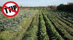 TTIP, agricultura e industria alimentaria / TTIP, agriculture and food i...