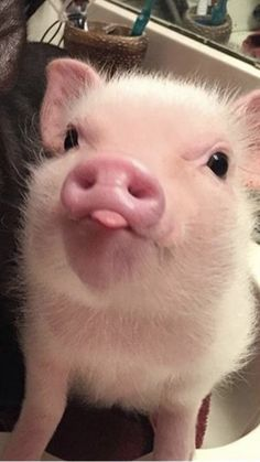 Baby Farm Animals, Baby Animals Super Cute, Baby Animals Pictures, Cute Animal Photos, Cute Little Animals, Cute Funny Animals, Funny Animal Pictures, Funny Animal Jokes, Baby Cows
