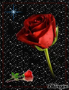 Permita-se  olhar: com os olhos do coração.. Permita-se compreender com a alma Permita-se caminhar ao  lado Permita-se falar de amor Permita-se ser  amigo Permita-se amar e ser amado Pois se é o amor que quer viver, só poderá a acontecer Se Você se permitir Pois, nos designo do amor só nos é oferecido aquilo que ofertamos e realmente queremos Permita-se... Flowers Gif, Beautiful Rose Flowers, Beautiful Gif, Love Flowers, Beautiful Birds, I Love You Hubby, Imagenes Gift, I Love You Images, Different Shades Of Red