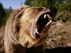 Preventing and Surviving a Bear Attack