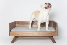 Raised Dog Beds from PUP and KIT