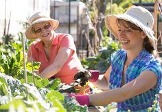 Community garden opens doors for all Sydney City, Get Started, Allotments, Community, Gardens, Doors, Outdoor Gardens, Garden, House Gardens