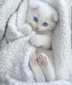 All cozy