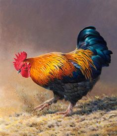 Andrew Wildlife Illustrations by Andrew Hutchinson Rooster Painting, Rooster Art, Chicken Painting, Chicken Art, Farm Animals, Animals And Pets, Arte Do Galo, Gallus Gallus Domesticus, Chicken Pictures