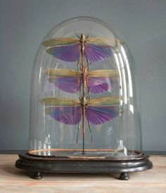 Purple locust cloche (I know they aren't butterflies but where else was I to put them?