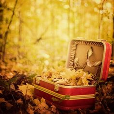Sentimental Journey - Autumn photograph, Fall Photography, Vintage suitcase among fall leaves Eyes Poetry, Photo Deco, Dreams And Visions, Vintage Suitcases, Vintage Luggage, Thanksgiving, Autumn Photography, Photography Ideas, Poetry Photography