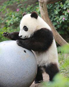 Mr. Wu plays ball