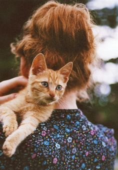 little red kitten by Tina Sosna