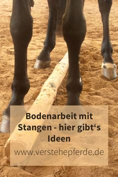 Floor work with bars, exercises with bars, ideas with bars - Pferde - Horse Riding Pants, Trail Riding Horses, Horse Riding Tips, Horseback Riding Outfits, Natural Horsemanship, All About Horses, Horse Training, Horse Love, Beautiful Horses