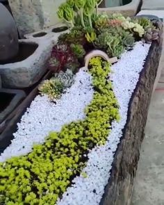 Succulent Planter WOWExquisite Succulent Planter WOW Best White Gravel Landscaping Ideas & Designs For 2019 Amazing DIY Spring arrangements that remarkably differentiate the color and decoration in the garden Succulent Gardening, Garden Planters, Planting Succulents, Succulent Care, Container Gardening, Vegetable Gardening, Gardening Books, Organic Gardening, Log Planter