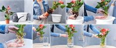 A bare-rooted Anthurium just in water (so, no soil) is the very latest – so very trendy and so eye-catching in any home. All Plants, Water Plants, Water Garden, Growing Plants, Hydroponic Gardening, Container Gardening, Succulents Garden, Planting Flowers, Clusia