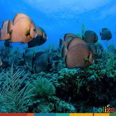 #Tbt to our #underwater #adventures.. #dive #BelizeReef #picoftheday #discoverhowtobe.