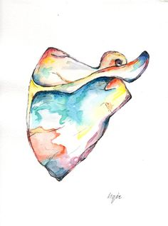 Watercolour Scapula Painting Anatomy Art by AlmostAnatomical