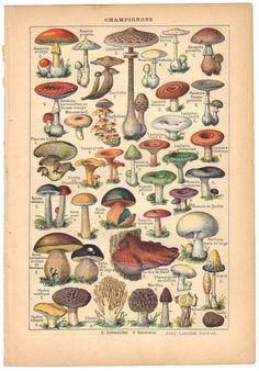 1915 mushrooms