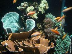 Fond ecran poisson rouge dans un aquarium