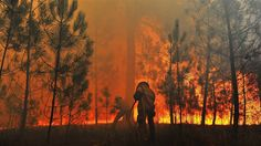 forest fires | Forest fires continue to rage in Portugal - PhotoBlog