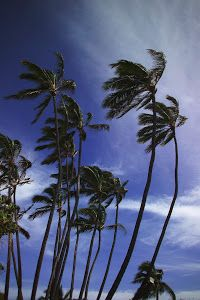 Trade Winds by Dennis Begnoche - Photo taken wth trade winds coming in Kauai. Click on the image to enlarge.