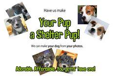 shelterpups.com - you send pics of your beloved dog and they custom make a miniature replica of your dog.  Very cool.  You can also donate your rescue points (from your order) and it helps your local shelter :)