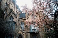 old manor and cherry blossoms
