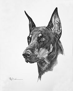 Mary Dove - Dog Show Trial Dobe with Long Ear Cut - Pencil Drawing- Pencil - Painting entry - May 2013 BoldBrush Painting Competition # Dog Pencil Drawing, Pencil Art Drawings, Drawing Sketches, Pencil Painting, Animal Sketches, Animal Drawings, Dobermann Tattoo, Doberman Dogs, Dobermans