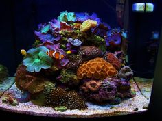 just got a salt water tank, hoping to get it to look like this!